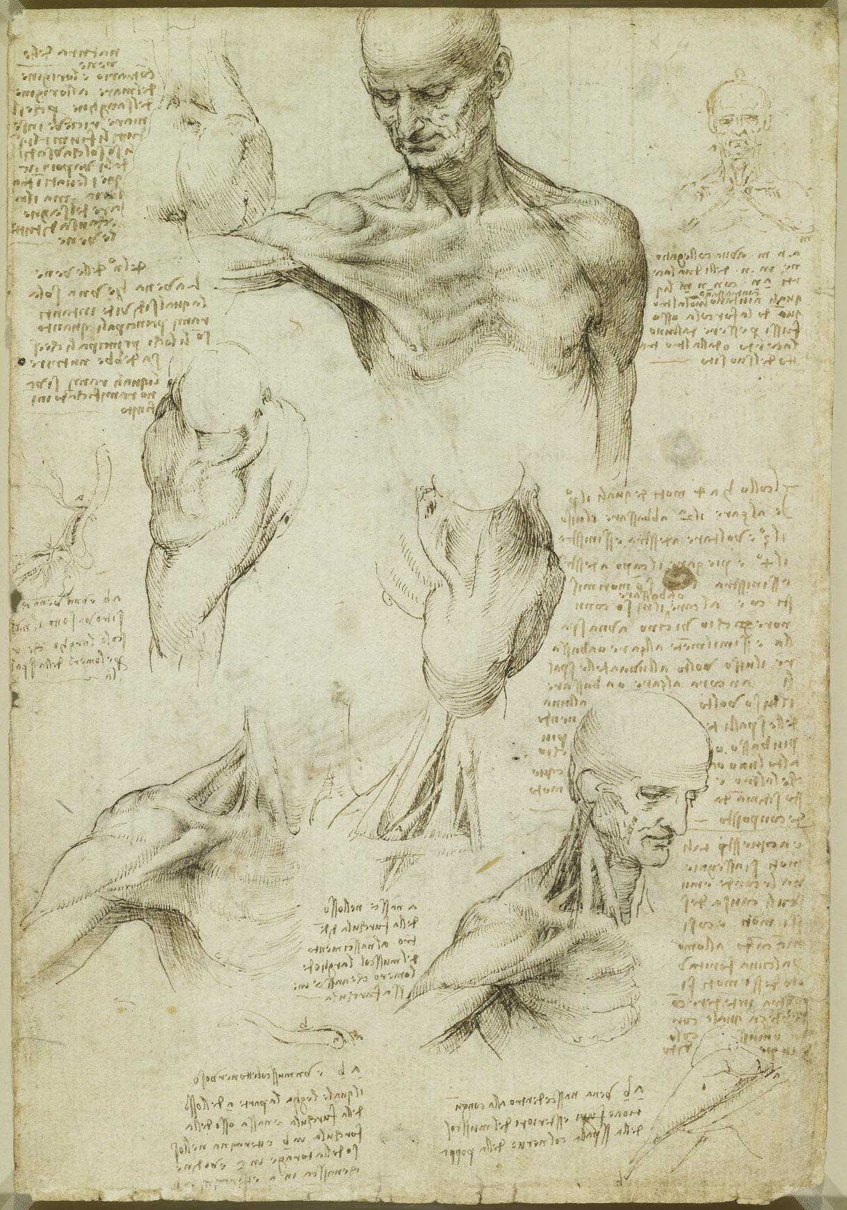 Leonardo Da Vinci Vinci 1452 Amboise 1519 Recto The Superficial