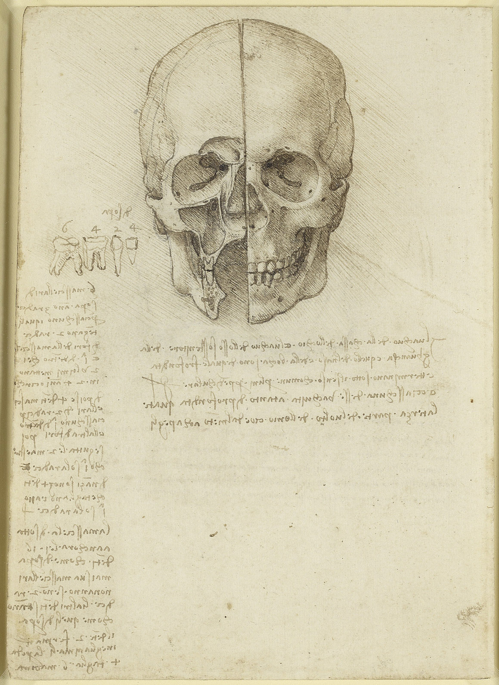 <p>A drawing of askull viewed obliquely from above and the left, whichshowstheintracranial nervesand vessels.With notes belowon the importance of the cranium as the seat of all nervous activities, in Leonardo&rsqu