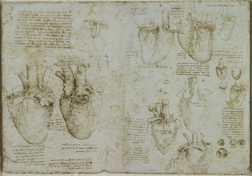 Recto:twelve diagrams illustrating the mechanism of the ventricles of the heart; notes on the drawings. Verso:two drawings ofa bovineheart;three diagrams demonstrating the function of the ventricles and one of a branched stru