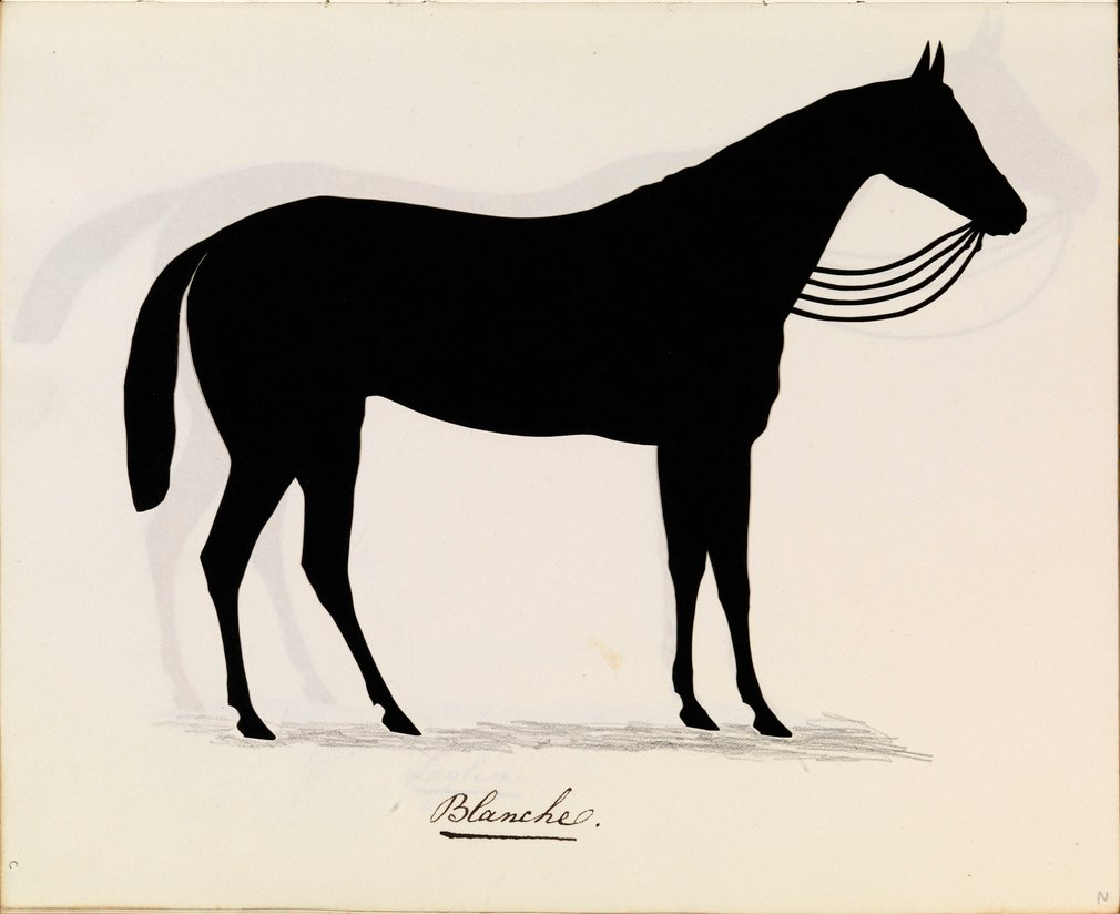 A silhouette showing Princess Victoria's horse Blanche. The horse is shown full-length, standing and facing right. Reins are shown between the horse's chin and neck and a shadow is shown in pencil at its feet. Inscribed below: Blanche.
