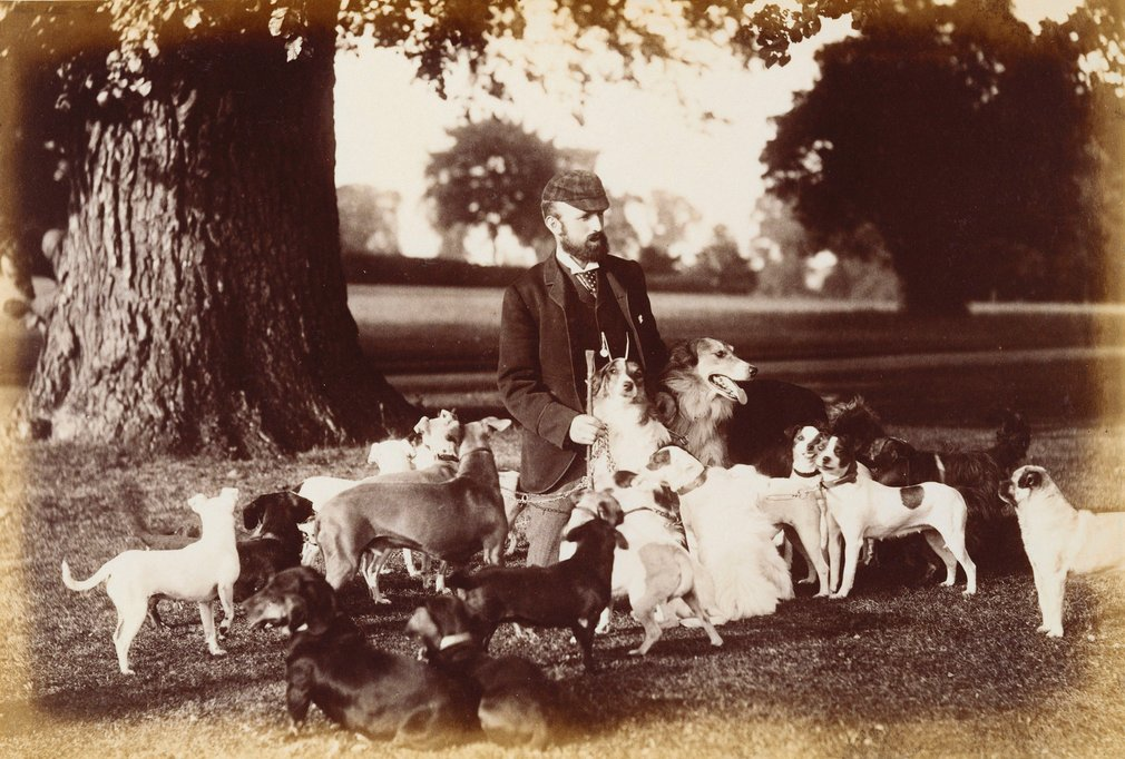 Photograph of Mr Hill, the kennel master, under a tree surrounded by dogs from the Windsor kennels. The group of dogs includes Borzois, pugs, fox terriers, greyhounds and dachshunds. Either Mr. Joseph Hill or Mr. Oliver Hill (apparently unrelate
