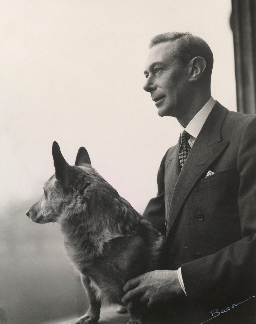 Photograph of King George VI (1895-1952) with a corgi. King George VI is standing and looking out of a window in Buckingham Palace. Captured in profile, he faces left. The dog sits on the windowsill, its head turned away from the camera. This is