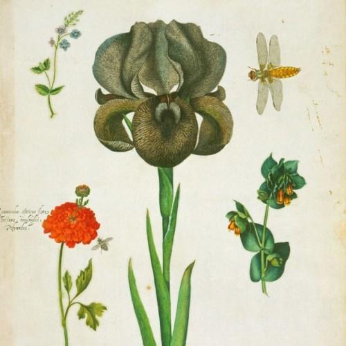 Alexander Marshal flowers