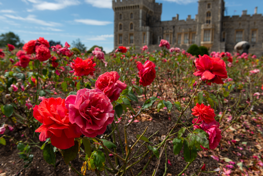 The design was inspired by pink roses in the East Terrace Garden at Windsor Castle, which bloom in June, the month of The Queen's official birthday