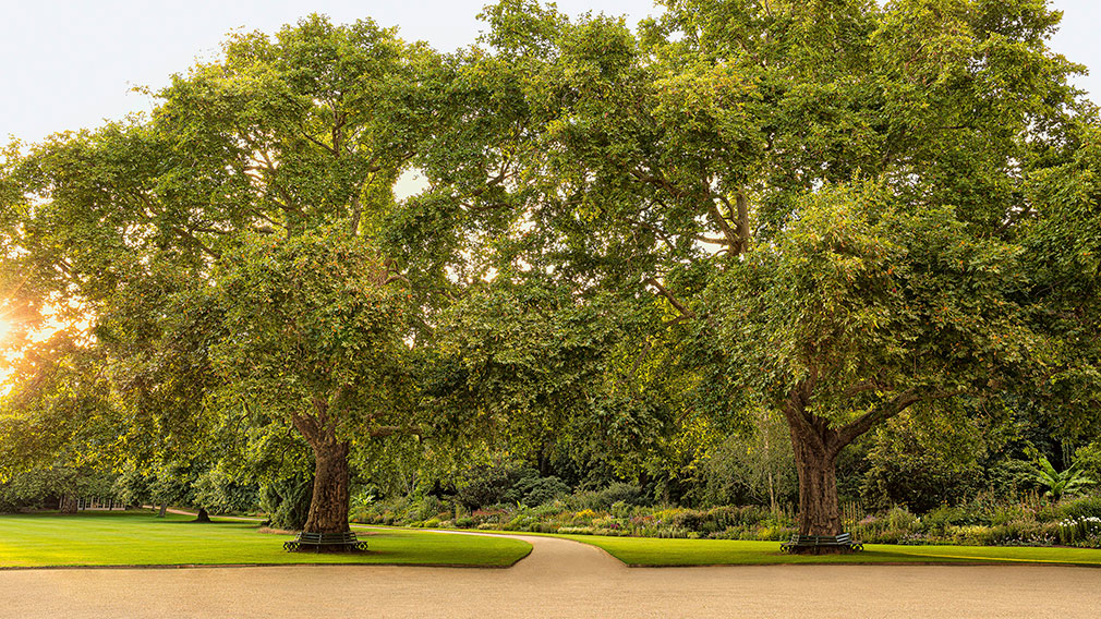 Known as Victoria and Albert, the garden's two most famous plane trees were planted by the Queen and her consort more than 150 years ago. Photographer: John Campbell
