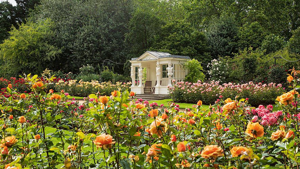 The Rose Garden at Buckingham Palace