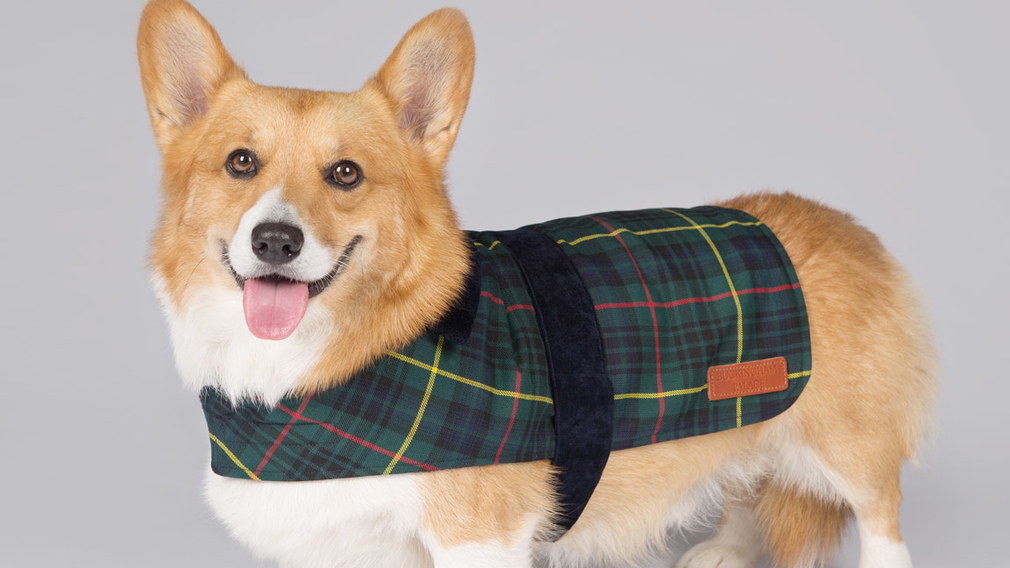 Corgi wearing Royal Collection Trust pet range