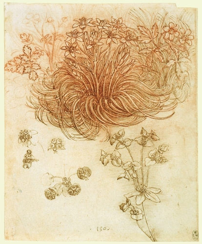 Star of Bethlehem (Ornithogalum umbellatum), wood anemone (Anemone nemorosa) and sun spurge (Euphorbia helioscopia)