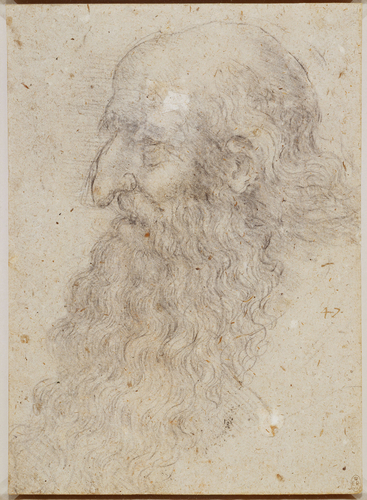The head of an old bearded man in profile