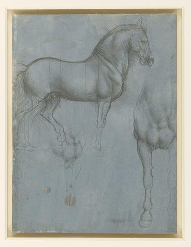 Studies of a horse