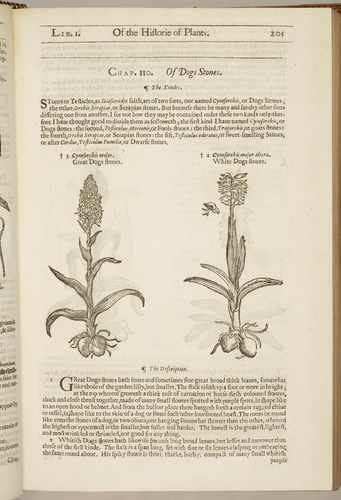 The Herball, or, Generall historie of plantes / by John Gerarde ; edited by Thomas Johnson