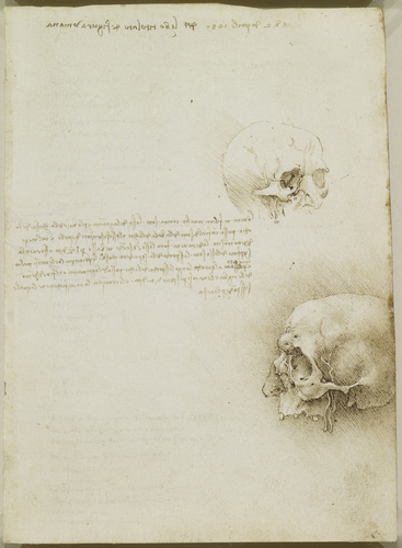 Recto: The cranium. Verso: Notes on topics to be investigated