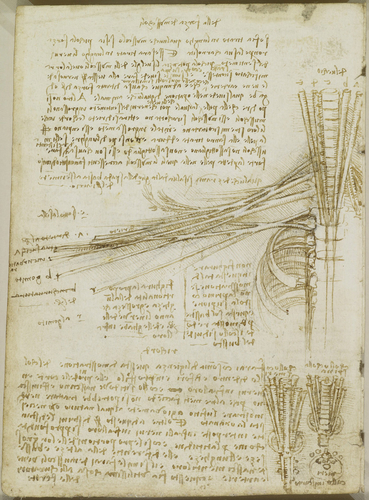 Recto: The mesentery of the bowel and its blood supply, with notes. Verso: The brachial plexus