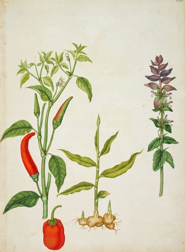 Chilli pepper, sweet pepper, ginger and clary sage