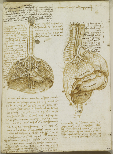Recto: The bladder. Verso: The lungs