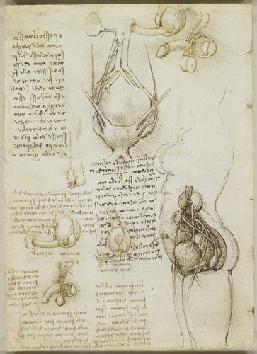 Recto: The vulva and anus. Verso: The male and female reproductive systems