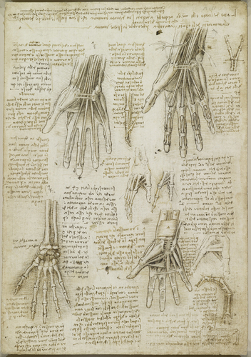 Recto: The bones, muscles and tendons of the hand. Verso: The bones of the hand