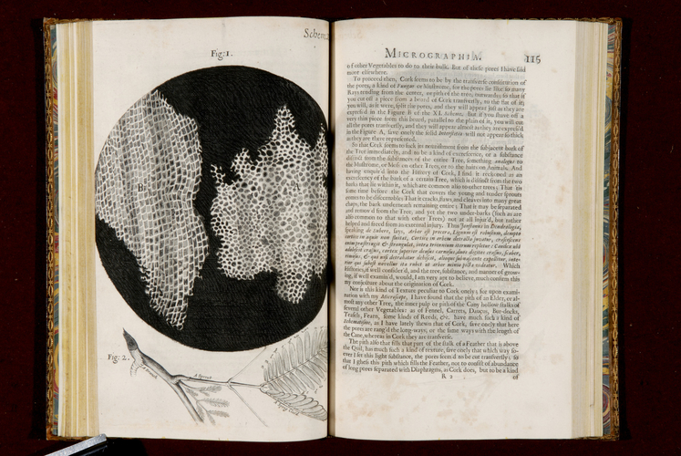 Micrographia : or some physiological descriptions of minute bodies made by magnifying glasses with observations and inquiries thereupon / Robert Hooke