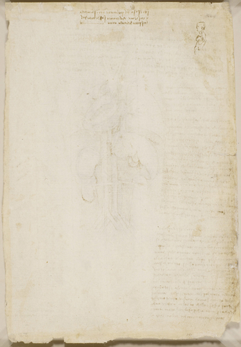 Recto: The heart, lungs, liver, spleen and kidneys, with blood vessels, and notes. Verso: A figure in profile showing the position of the lungs, with notes