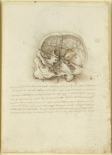 Recto: The cranium sectioned. Verso: The skull sectioned
