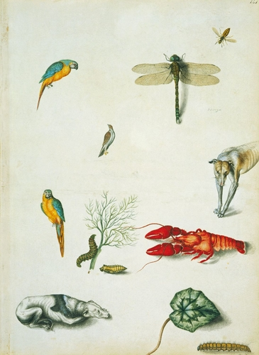 Blue and yellow macaws, southern hawker, wasp, unidentified bird, caterpillar and chrysalis of swallowtail butterfly, crayfish, greyhounds, cyclamen leaf, and oak eggar caterpillar