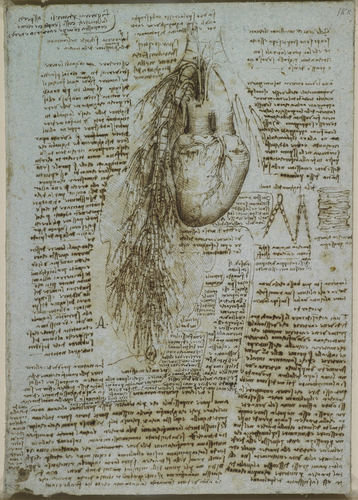 Recto: The heart, bronchi and bronchial vessels. Verso: A sketch of the heart and great vessels