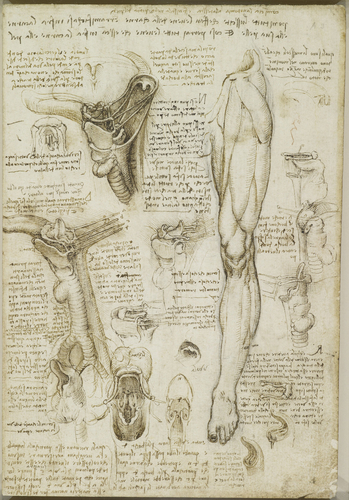 Recto: The throat, and the muscles of the leg. Verso: The bones of the foot, and the muscles of the neck