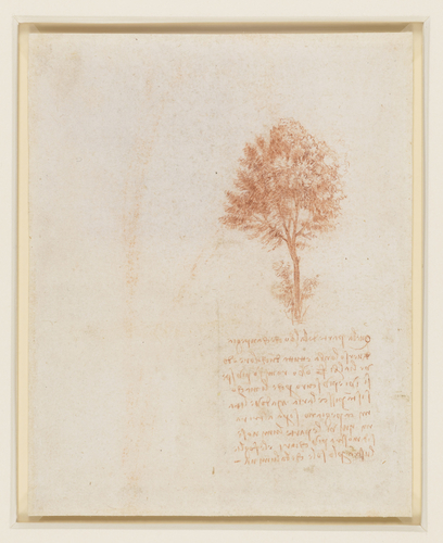 Recto: A stand of trees. Verso: A tree