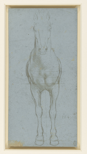 A study of a horse