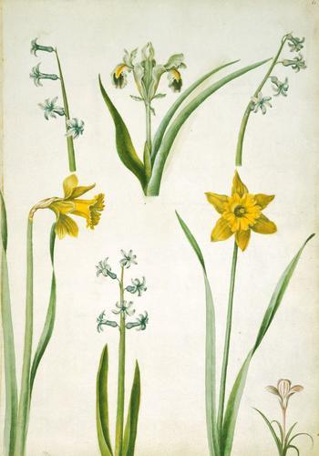 Hyacinths, Persian iris, Spanish daffodils and purple crocus