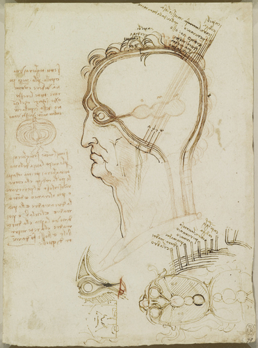Recto: The layers of the scalp, and the cerebral ventricles. Verso: Studies of the head