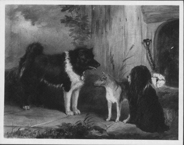 Three Dogs: An Eskimo Dog, A Basenji from the Niger and Nelson, a Poodle