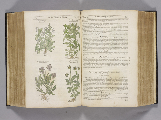 The Herball, or, Generall historie of plantes, gathered by John Gerarde of London, Master in Chirurgerie . . . enlarged and emended by Thomas Johnson . .