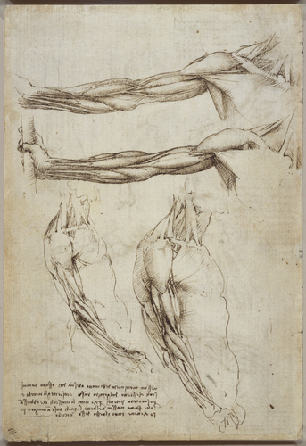Recto: The bones of the foot, and the shoulder. Verso: The veins and muscles of the arm