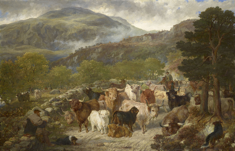 Highland Cattle in the Pass of Leny
