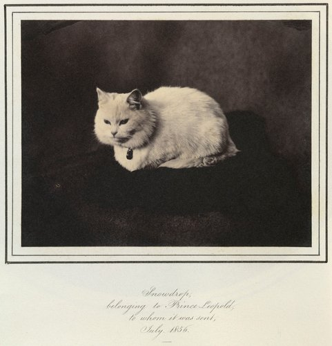 Snowdrop, Prince Leopold's cat