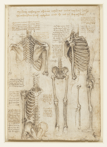 Recto: The skeleton. Verso: The muscles of the face and arm, and the nerves and veins of the hand