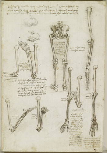 Recto: The bones of the arm and leg. Verso: The surface anatomy of the shoulder