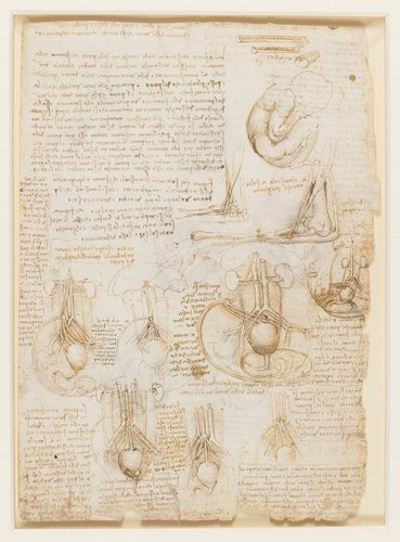 Recto: The foetus, and the muscles attached to the pelvis. Verso: Studies of the foetus, related internal organs, and the arm