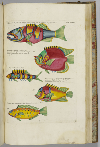 Poissons, ecrevisses et crabes. . . que l'on trouve autour des Isles Moluques, et sur les cotes des Terres Australes. . . / Louis Renard