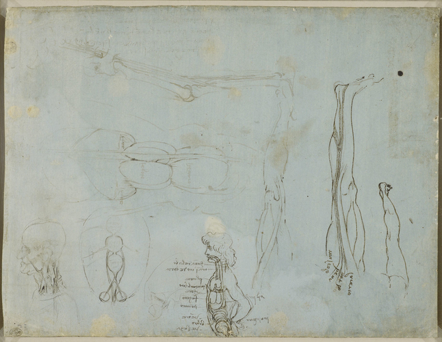 Recto: Miscellaneous anatomical studies. Verso: The leg sectioned