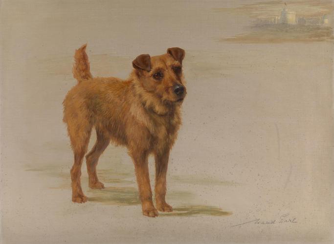 Jack, King Edward VII's Irish Terrier