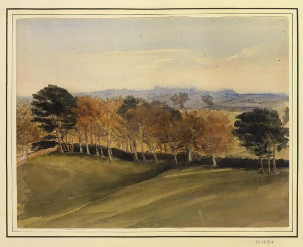 A parkland landscape