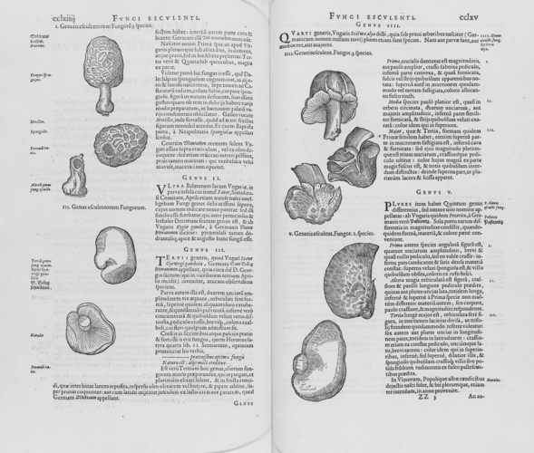 Rariorum plantarum historia / Carolus Clusius