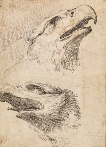 Two heads of eagles