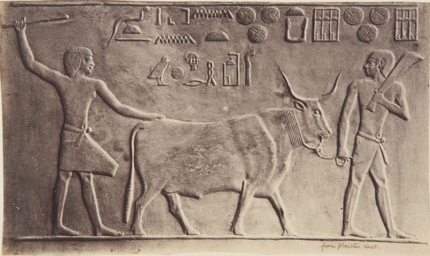 Egyptian Bas Relief