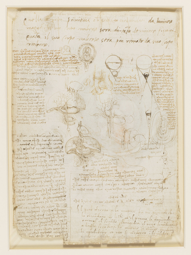 Recto: The foetus in the womb. Verso: Notes on reproduction, with sketches of a foetus in utero, etc