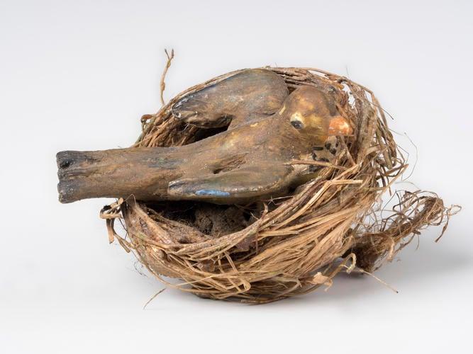 Blackbird in nest