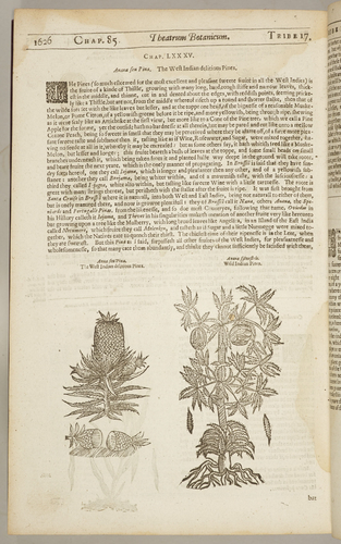 Theatrum Botanicum : the theater of plants. Or, a herball of a large extent. . . / distributed into sundry classes. . . by Dr. Lobel, Dr. Bonham. . . collected by John Parkinson, Apothecary of London