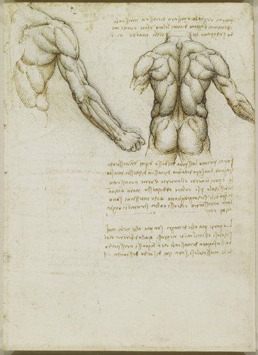 Recto: The muscles of the back and arm. Verso: Studies of the intercostal muscles